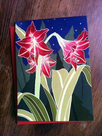 amaryllis-photo